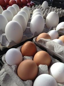 Goose Eggs!