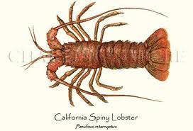 California Spiny Lobster